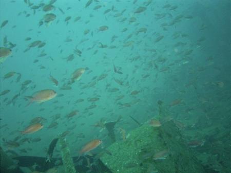 Europeandiving School,St.-Tropez (Südfrankreich),Frankreich