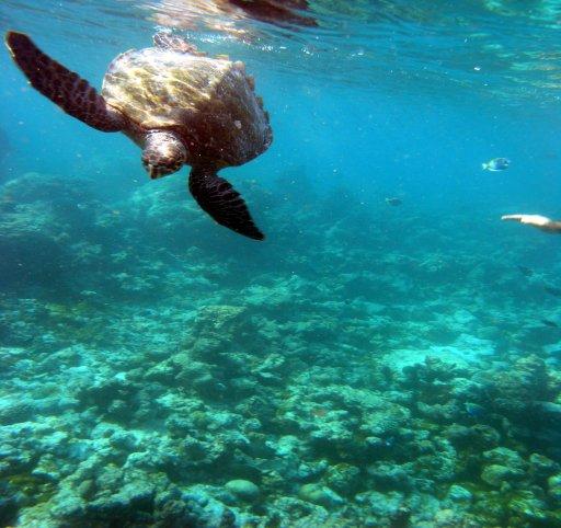 Summer Island Village (Ziyaaraifushi), Summer Island (Village),Nord-Male Atoll,Malediven,Summer Island Village