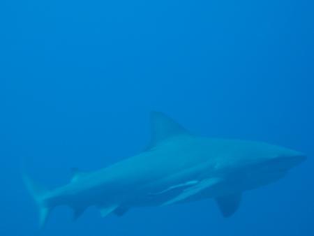 Blue Marlin Diving Koh Tao,Golf von Thailand,Thailand