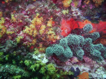 Euro-Divers,Cala Joncols,Costa Brava,Festland,Spanien