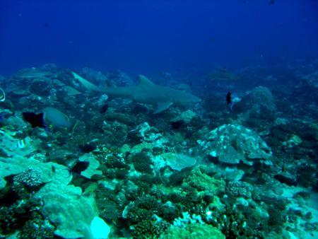 TOPdive Moorea,Französisch-Polynesien