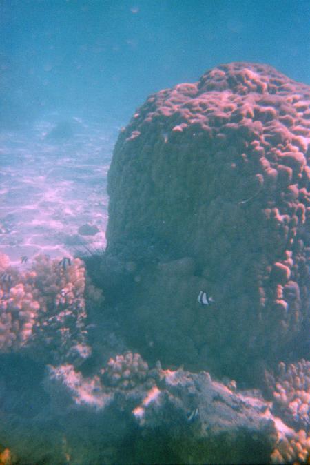 The Dive Centre,Rarotonga,Cookinseln