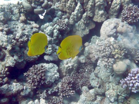 Pro Scuba Diving (ex Cupidon DC),Dana Beach Resort,Hurghada,Ägypten