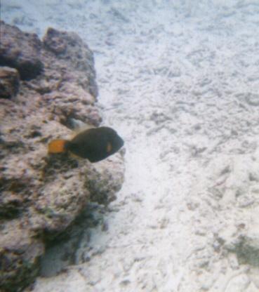 Kandooma, Kandooma,Süd-Male Atoll,Malediven