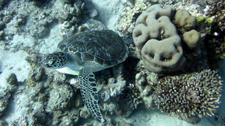 TGI Diving Gorgonia Beach Resort,Marsa Alam,Marsa Alam und südlich,Ägypten