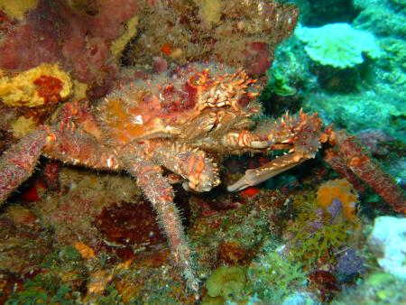 Dive Dominica,Dominica