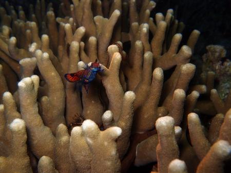 Extra Divers Gawana-Bali,Bali,Indonesien