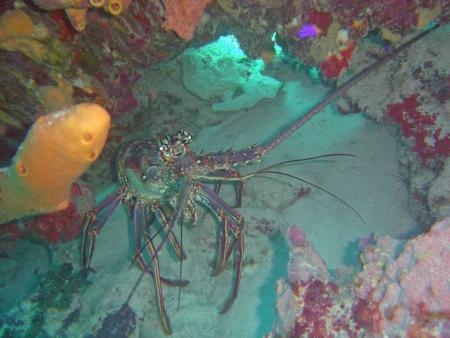 Div´Ocean Bonaire,Bonaire,Niederländische Antillen
