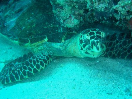 Praslin,Seychellen