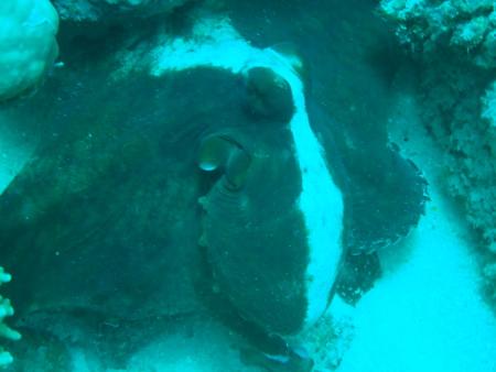 Deep Ocean Blue Diving Center,Marsa Alam,El Quseir bis Port Ghalib,Ägypten