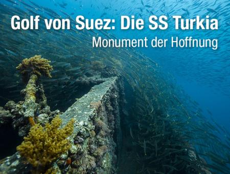 Wrack der SS Turkia (ex Livorno),Ägypten