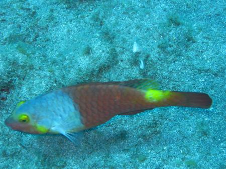 Descubare-Atlantico,El Medano,Teneriffa,Kanarische Inseln,Spanien
