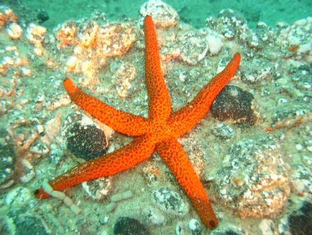 Aquamarin,Jandia,Fuerteventura,Kanarische Inseln,Spanien