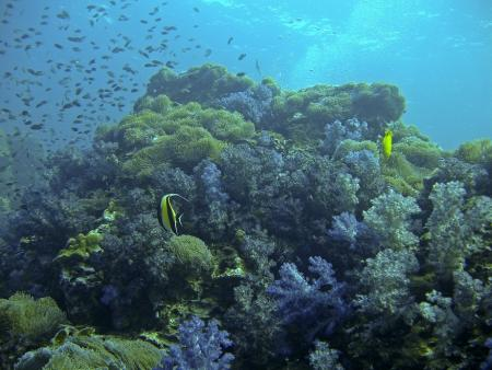 M/V Dolphin Queen,Similan Diving Safaris,Khao Lak,Thailand