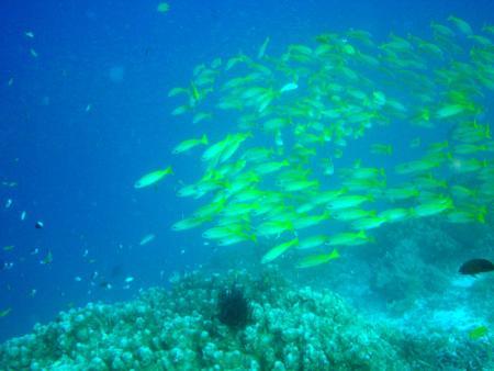 M/V Andaman (Sea-Dragon Khao Lak),Thailand