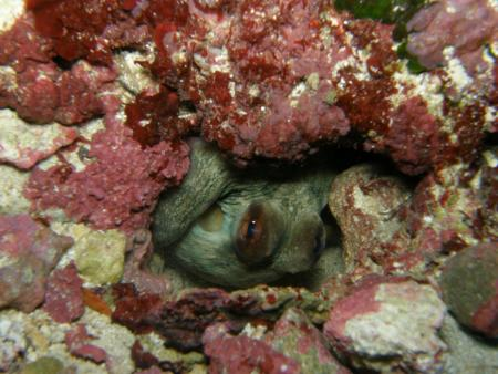 Octopus Garden,Malta Qawra St. Paul´s Bay,Malta