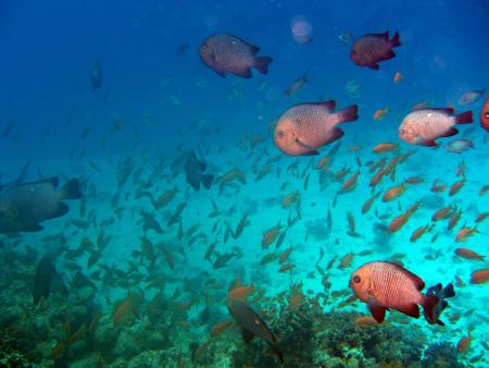 Shaab El Erg (Poseidon Reef,Dolphin House),Ägypten