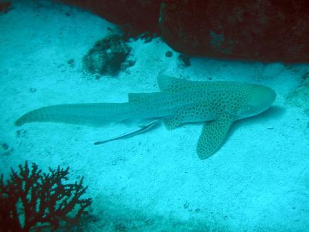 Dive Asia,Phuket,Andamanensee,Thailand