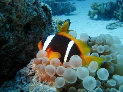 Mr. Diver,Sharm el Sheikh,Sinai-Süd bis Nabq,Ägypten