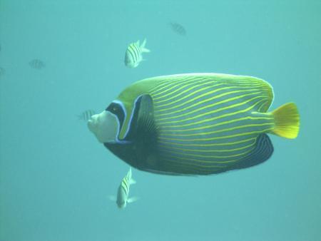 Ducks Dive Center,Safaga,Ägypten