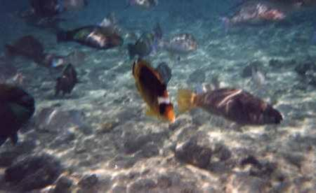 Extra Divers,Three Corners Palmyra Resort,Nabq Bay,Sinai-Süd bis Nabq,Ägypten