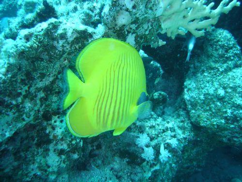 Coraya Divers, Koraffi (Marsa Alam),Ägypten