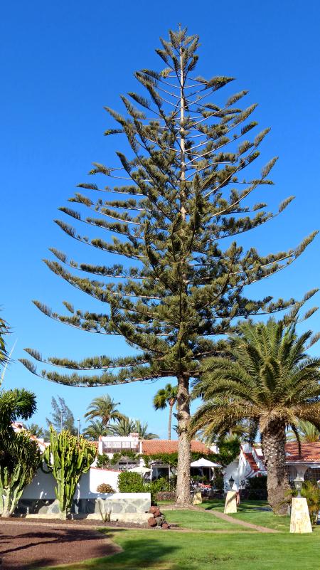 Parque Rey Carlos,Gran Canaria,Spanien