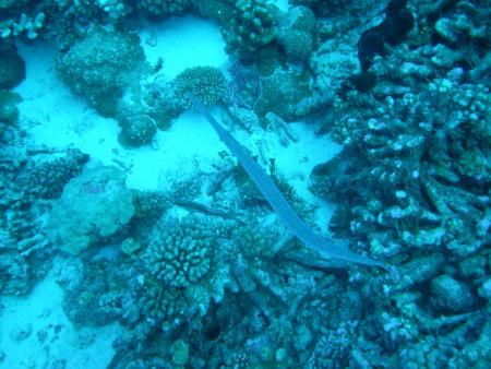 TOPdive,Fakarava North,Französisch-Polynesien