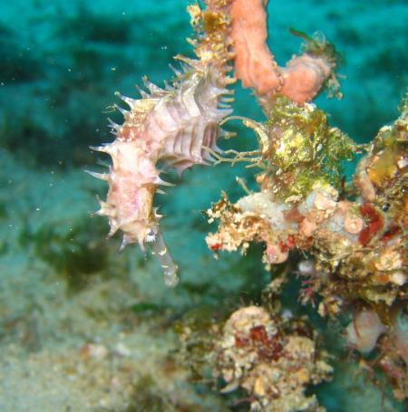 Abwonderdive Dive Resort  Small Lalaguna Puerto Galera.,Philippinen