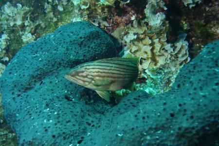Aquapro Diving Center,Bodrum-Bitez,Türkei