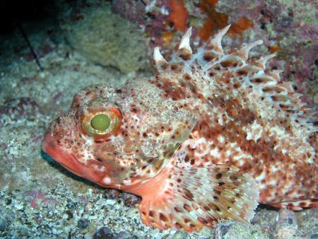 Dive Center Corralejo (Miguel Abella),Corralejo,Fuerteventura,Kanarische Inseln,Spanien