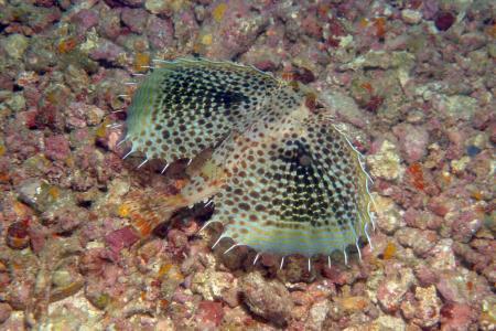 Sea Point Divers Mafia Isl.,Tansania