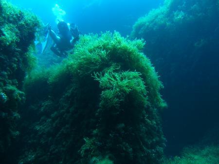 Blue Waters Dive Cove,Gozo,Malta