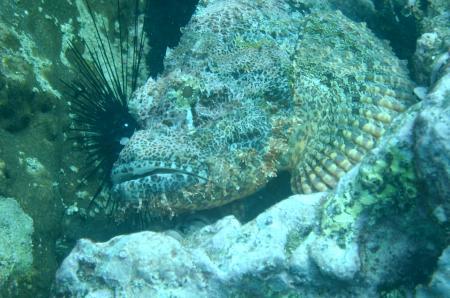 Coral Diving,Ao Nang,Andamanensee,Thailand
