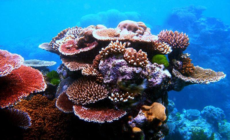 African Reef, Geraldton, Australien