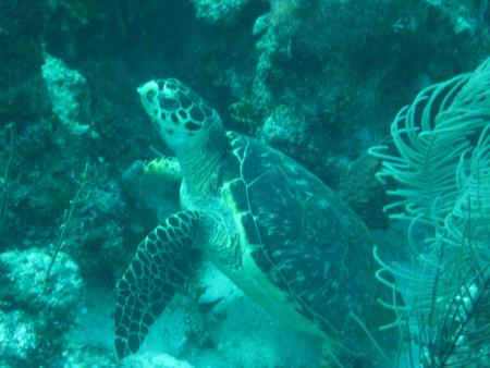 Hugh Parkey´s Belize Dive Connection,Belize