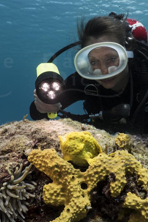 Anglerfisch - Playa Piskado, Poppy Hostel Curacao, Willemstad, Niederländische Antillen, Curaçao