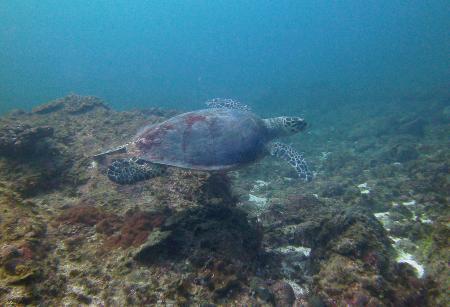 M/Y Saman Explorer,Oman
