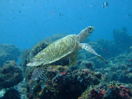 Atoll Explorer,Malediven