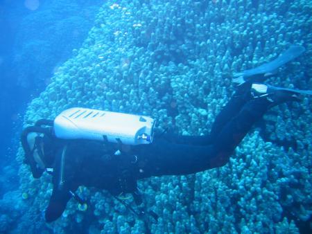 St. John´s Reef,Ägypten