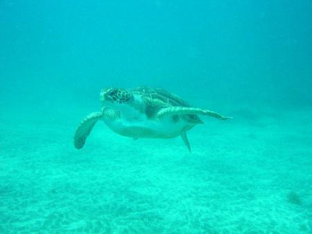 Aqua Marina,Playa las Americas,Teneriffa,Kanarische Inseln,Spanien