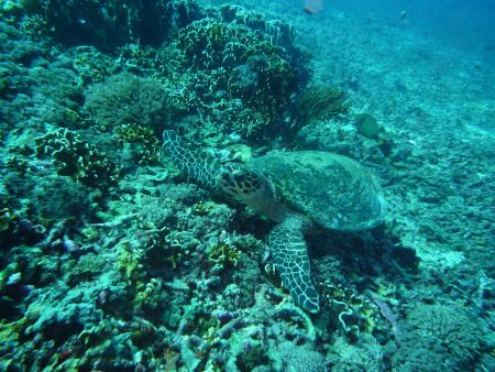 Dream Divers Gili Air,Allgemein,Indonesien