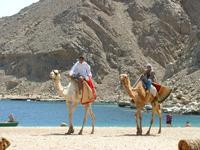 Bedouin Divers,Dahab,Sinai-Nord ab Dahab,Ägypten