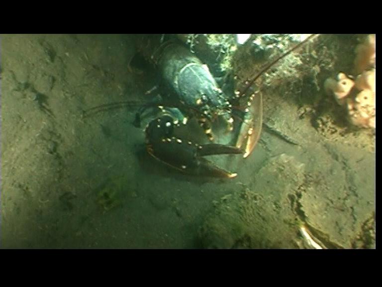 T´Koepeltje,Grevelinger Meer, T´Koepeltje,Grevelinger Meer,Niederlande