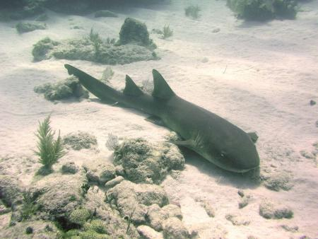 Dual Porpoise Charters Inc.,Key Largo,Florida,USA