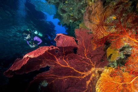 Lagoon Safari Diving,Lifou Island,Neukaledonien