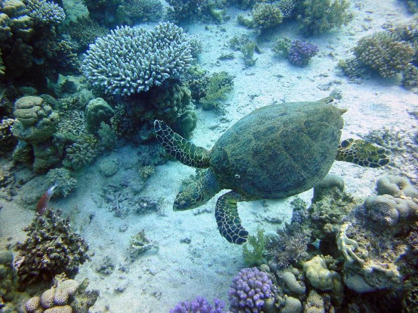 Südsafari Blue Seas März 2010, Südsafari,Ägypten