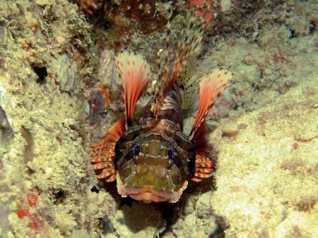 Blue Sea Divers,Beau Vallon,Mahé,Seychellen