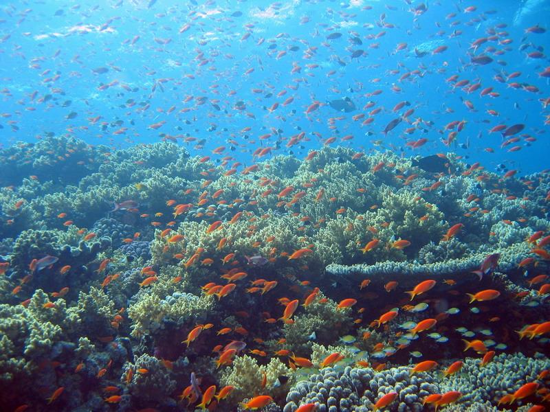 Lahami Bay, Lahami Bay,Ägypten