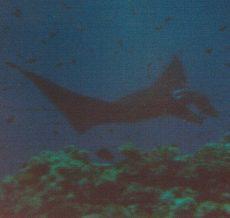 Wakaya Passage,Fidschi